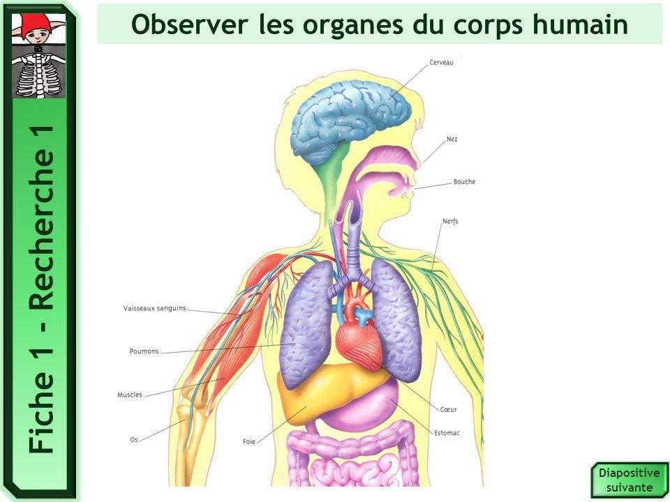 Diapositive suivante Observer les organes du corps humain Fiche 1 - Recherche 1