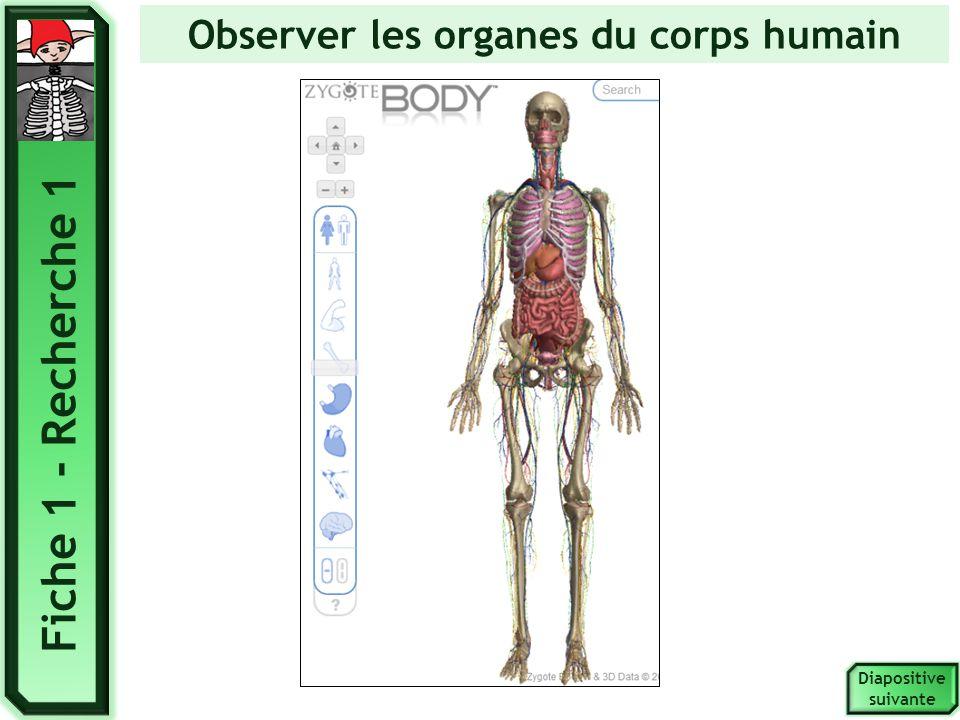 Classer les organes selon leur fonction. Diapositive suivante Fiche 1 - Recherche 2