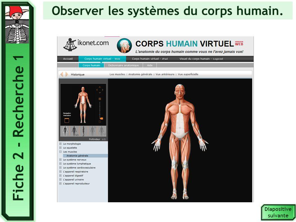 Observer les systèmes du corps humain. Fiche 2 - Recherche 1 Diapositive suivante