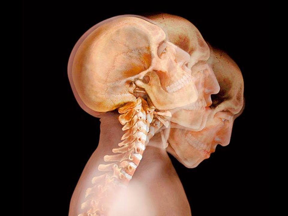 Le corps humain translucide