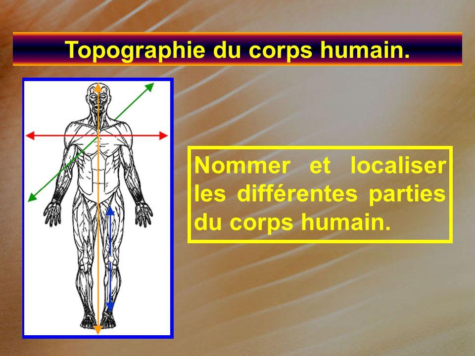 Topographie du corps humain. Nommer et localiser les différentes parties du corps humain.