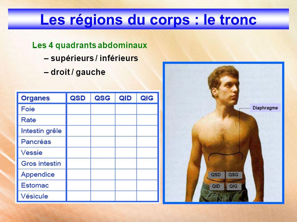 Les régions du corps : le tronc Les 4 quadrants abdominaux – supérieurs / inférieurs – droit / gauche