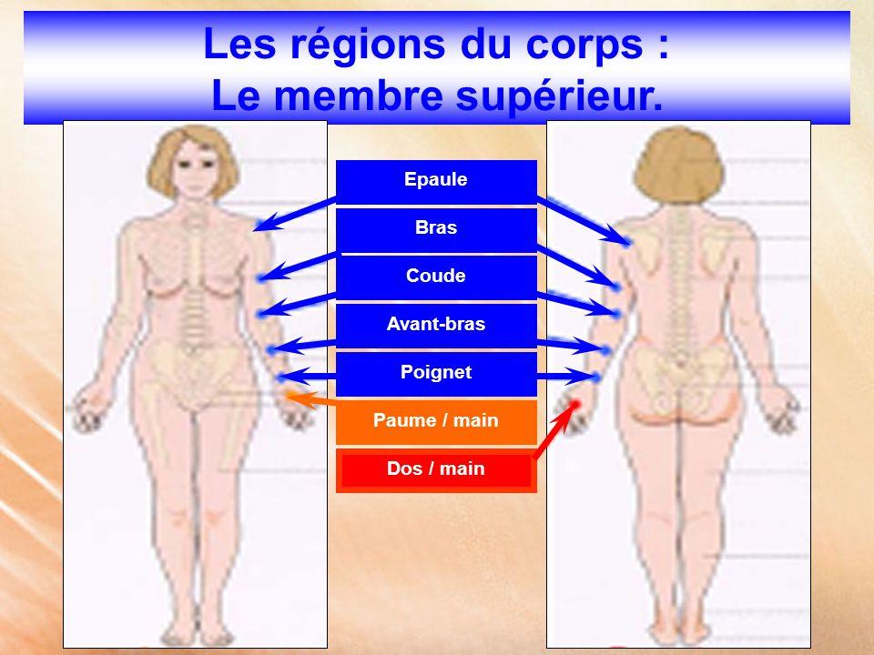 Les régions du corps : Le membre supérieur. Epaule Bras Coude Avant-bras Poignet Paume / main Dos / main
