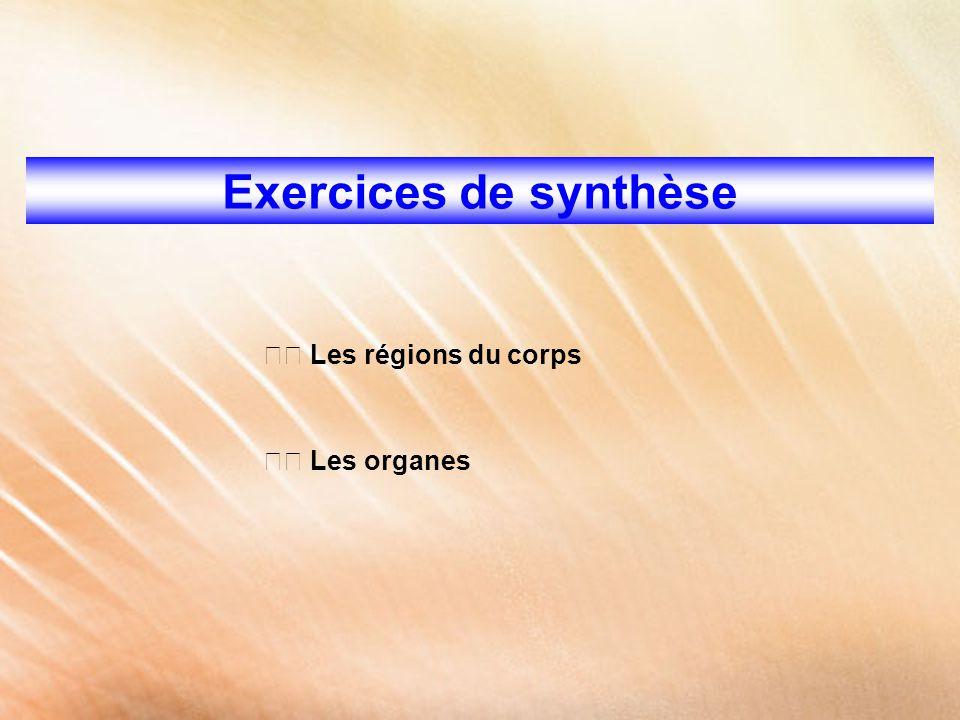 Exercices de synthèse Les régions du corps Les organes