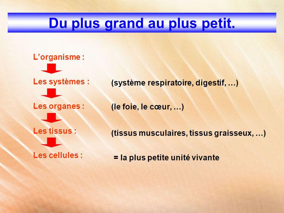 Du plus grand au plus petit. L'organisme : Les systèmes : Les organes : Les tissus : Les cellules : (système respiratoire, digestif, …) (le foie, le c