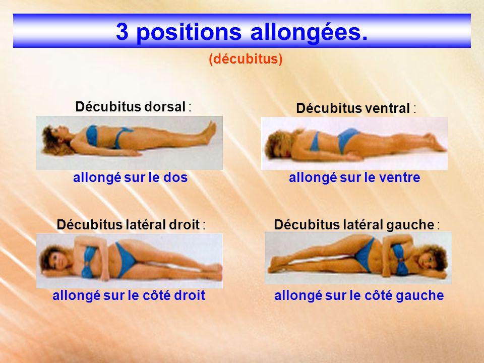 3 positions allongées. (décubitus) Décubitus dorsal : allongé sur le dos Décubitus ventral : allongé sur le ventre Décubitus latéral droit : allongé s