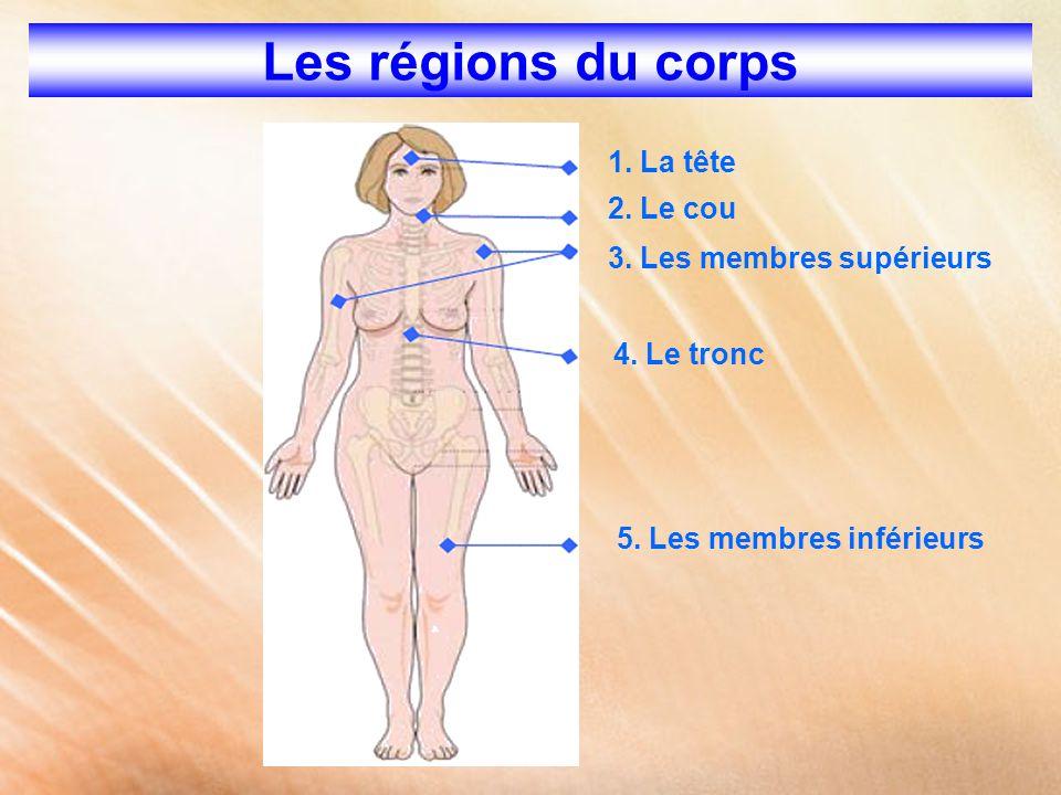 Les régions du corps 1. La tête 2. Le cou 3. Les membres supérieurs 4. Le tronc 5. Les membres inférieurs