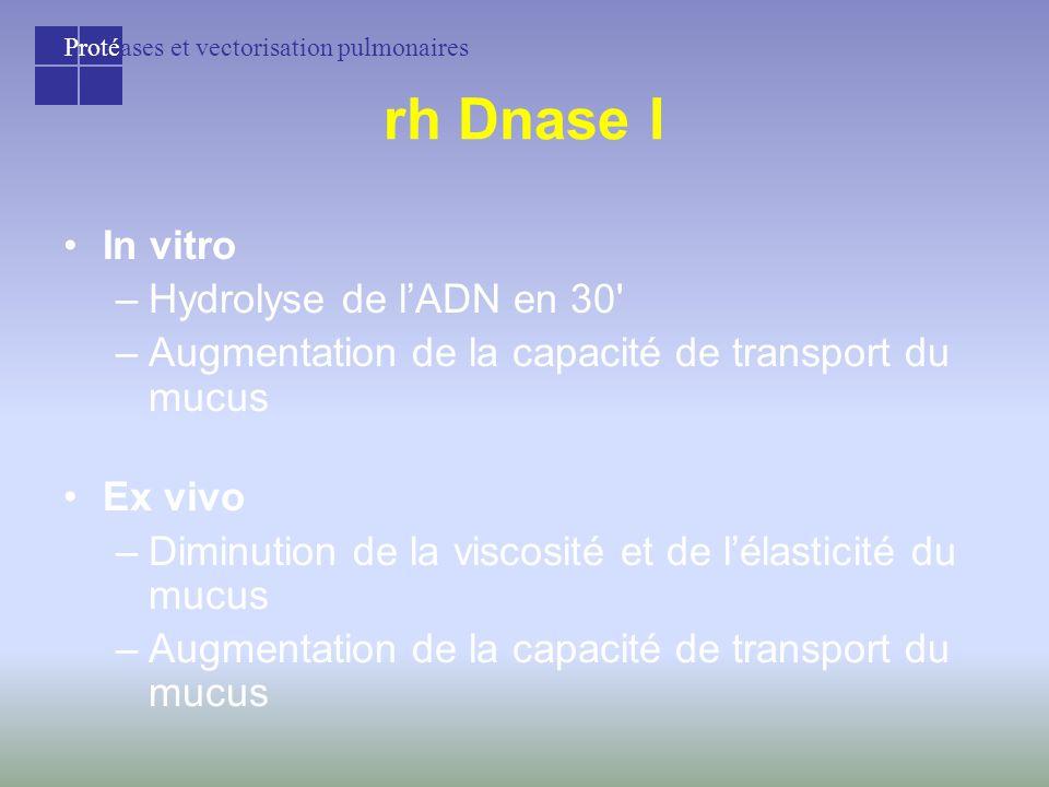 Protéases et vectorisation pulmonaires rh Dnase I In vitro –Hydrolyse de l'ADN en 30 –Augmentation de la capacité de transport du mucus Ex vivo –Diminution de la viscosité et de l'élasticité du mucus –Augmentation de la capacité de transport du mucus
