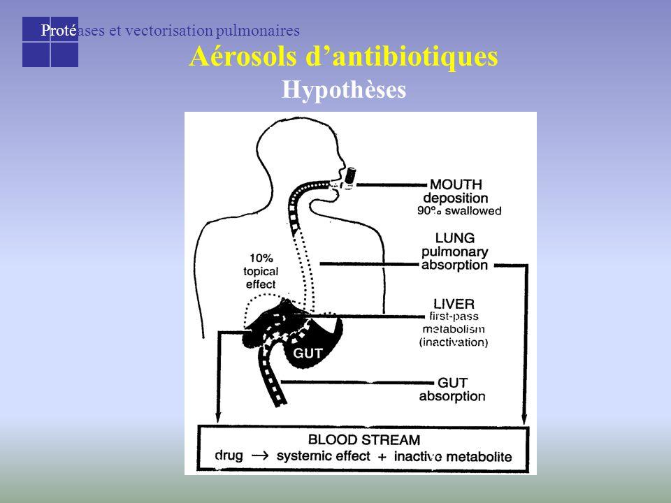 Protéases et vectorisation pulmonaires Aérosols d'antibiotiques Hypothèses