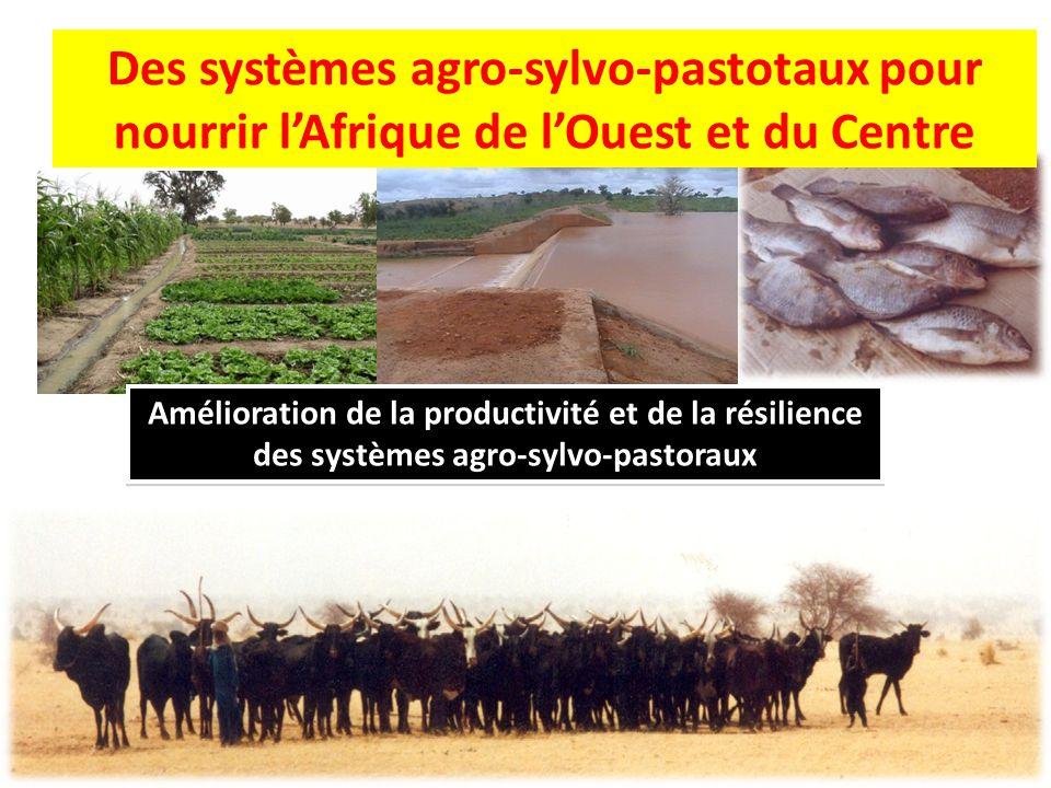 Amélioration de la productivité et de la résilience des systèmes agro-sylvo-pastoraux Des systèmes agro-sylvo-pastotaux pour nourrir l'Afrique de l'Ou