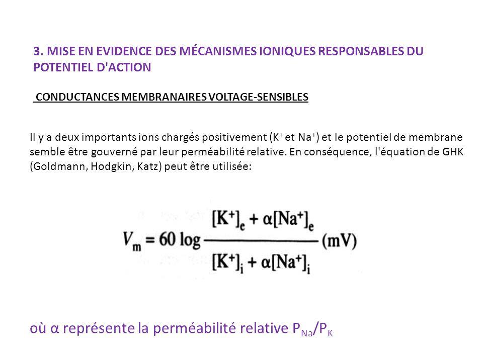 3. MISE EN EVIDENCE DES MÉCANISMES IONIQUES RESPONSABLES DU POTENTIEL D'ACTION CONDUCTANCES MEMBRANAIRES VOLTAGE-SENSIBLES Il y a deux importants ions
