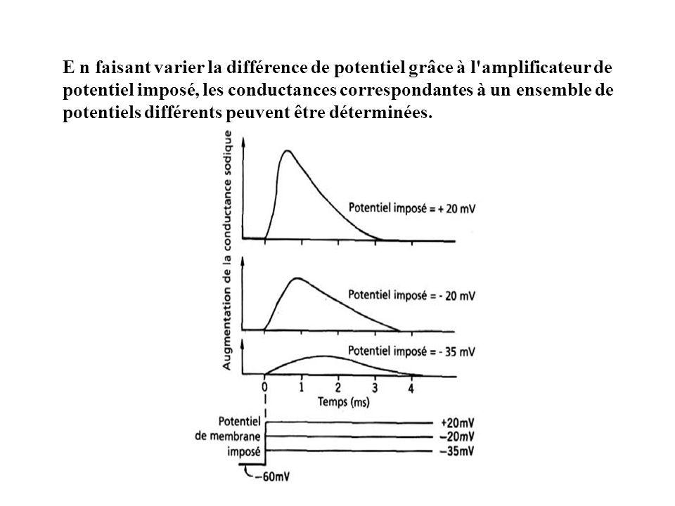 E n faisant varier la différence de potentiel grâce à l amplificateur de potentiel imposé, les conductances correspondantes à un ensemble de potentiels différents peuvent être déterminées.
