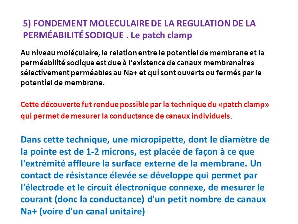 5) FONDEMENT MOLECULAIRE DE LA REGULATION DE LA PERMÉABILITÉ SODIQUE.