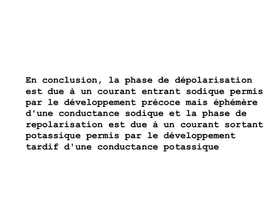En conclusion, la phase de dépolarisation est due à un courant entrant sodique permis par le développement précoce mais éphémère d une conductance sodique et la phase de repolarisation est due à un courant sortant potassique permis par le développement tardif d une conductance potassique