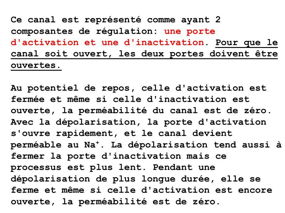 Ce canal est représenté comme ayant 2 composantes de régulation: une porte d activation et une d inactivation.
