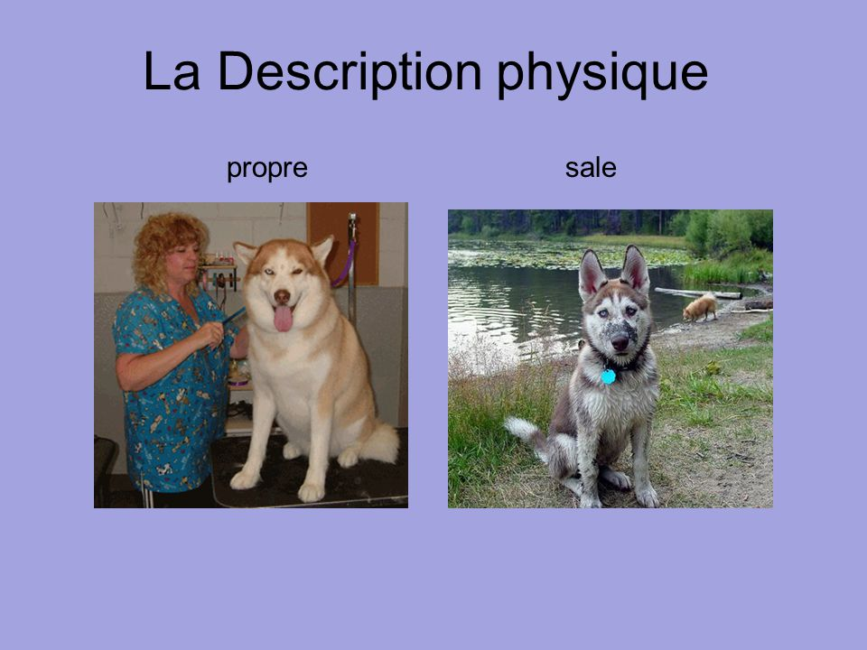 La Description physique propresale