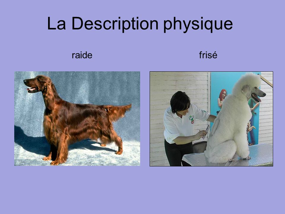 La Description physique raide frisé