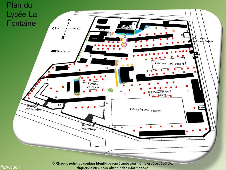 Plan du Lycée La Fontaine  Accueil  Chaque point de couleur identique représente une même espèce végétale, cliquez dessus, pour obtenir des informat
