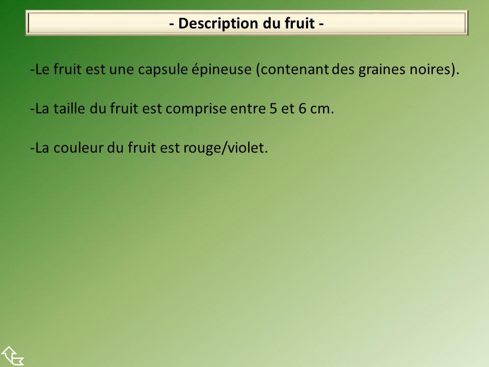 - Description du fruit -  -Le fruit est une capsule épineuse (contenant des graines noires). -La taille du fruit est comprise entre 5 et 6 cm. -La co