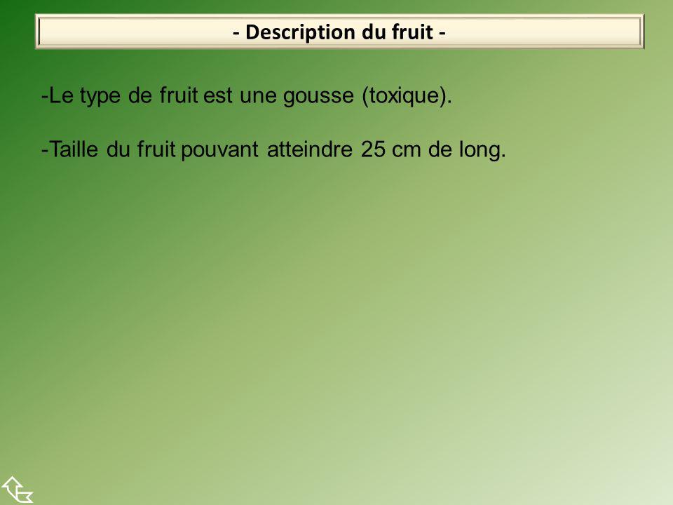 - Description du fruit -  -Le type de fruit est une gousse (toxique). -Taille du fruit pouvant atteindre 25 cm de long.