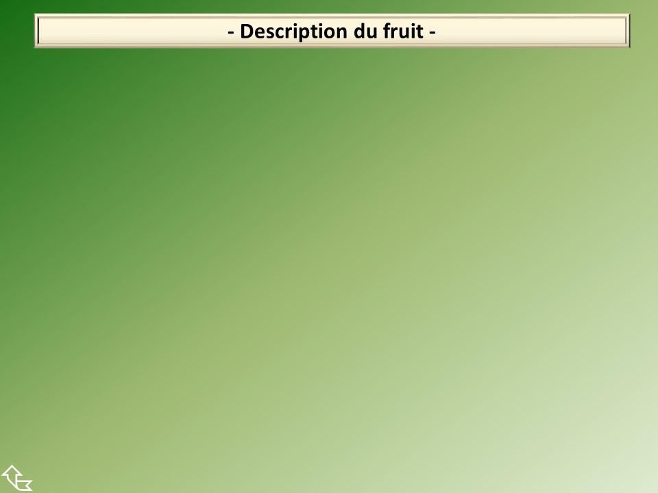- Description du fruit - 