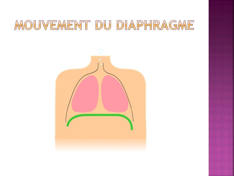 ● Echographie des coupoles diaphragmatiques :Amplitude, degré de la paralysie