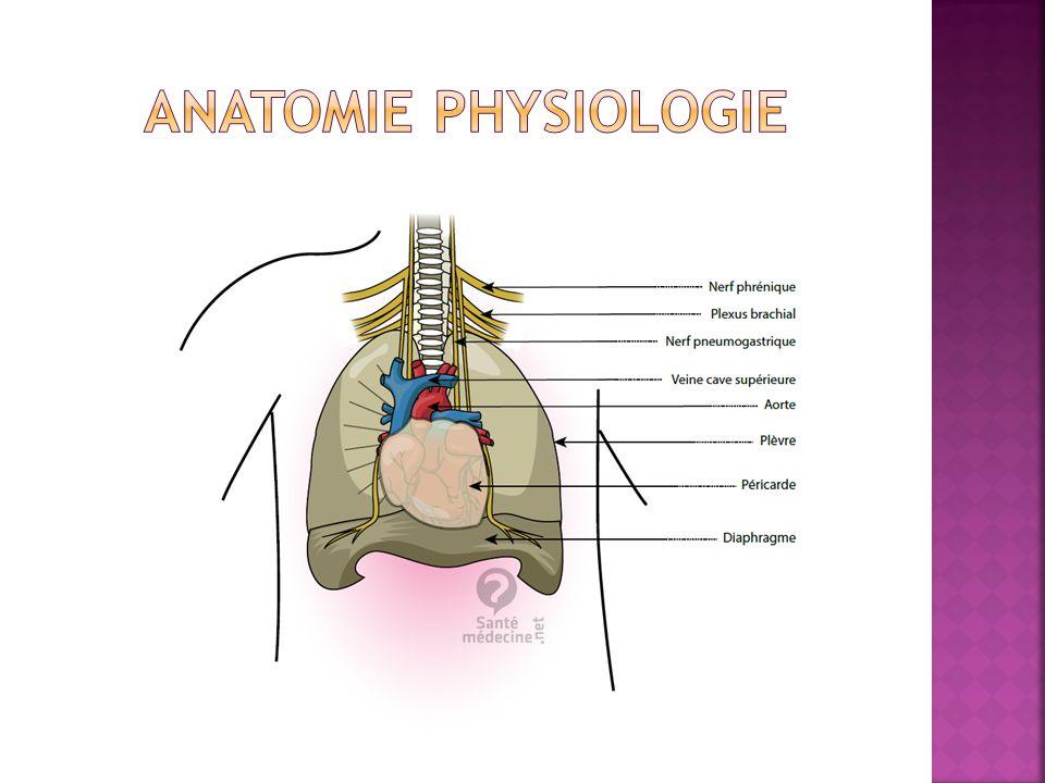  Récupération semi complète en cas de section unilatérale du nerf: Dyspnée d'effort