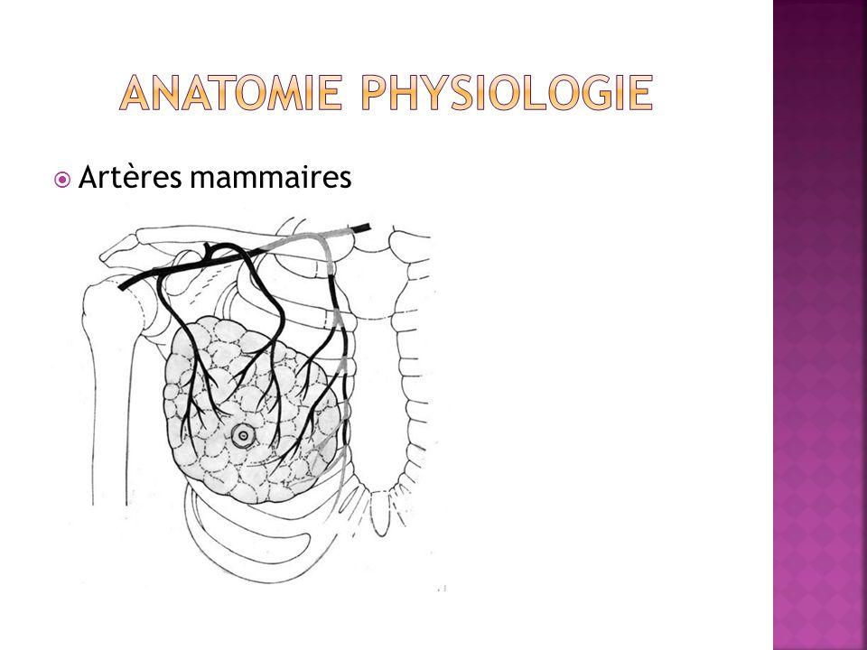  Artères mammaires