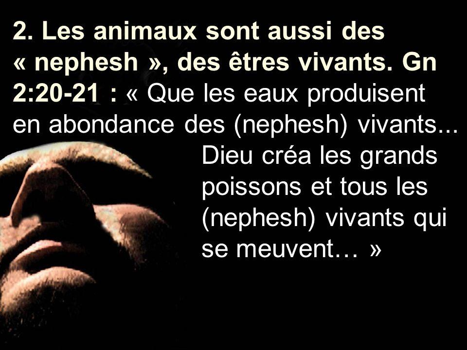 2. Les animaux sont aussi des « nephesh », des êtres vivants. Gn 2:20-21 : « Que les eaux produisent en abondance des (nephesh) vivants... Dieu créa l