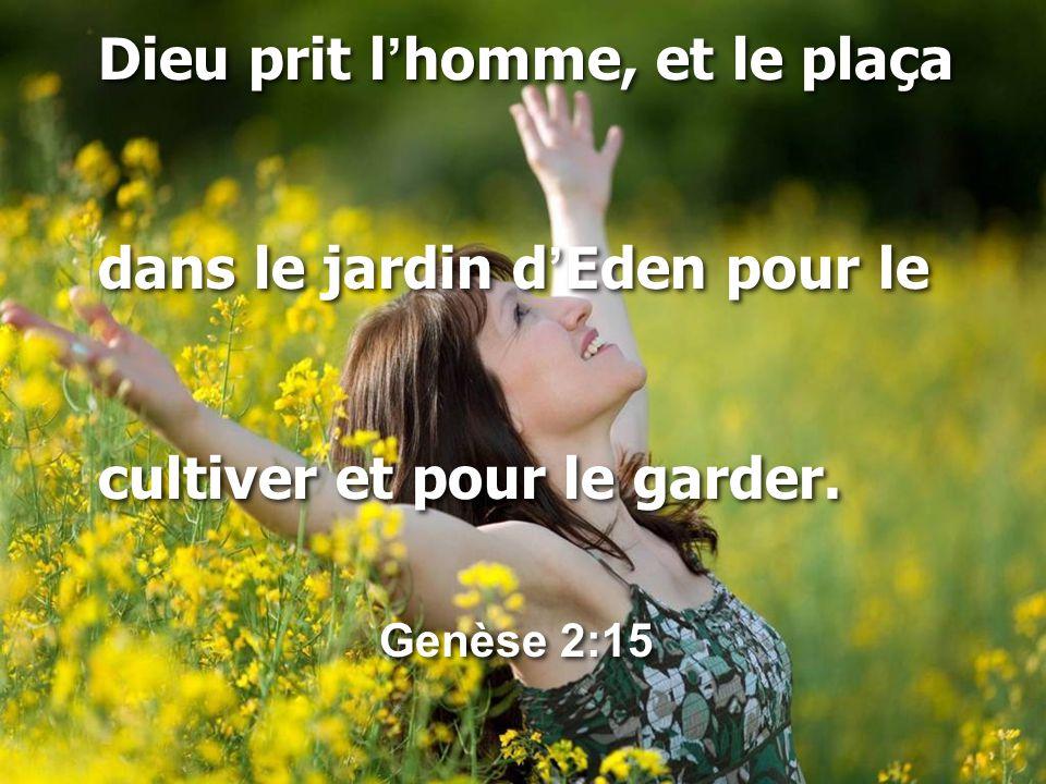 Dieu prit l'homme, et le plaça dans le jardin d'Eden pour le cultiver et pour le garder. Genèse 2:15 Dieu prit l'homme, et le plaça dans le jardin d'E