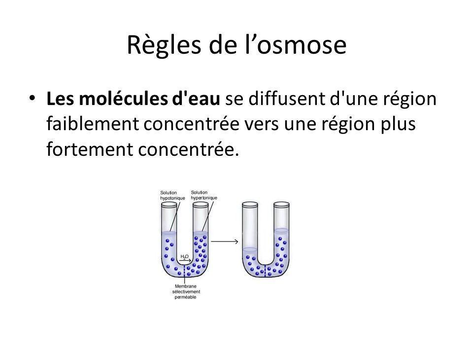 Règles de l'osmose Les molécules d'eau se diffusent d'une région faiblement concentrée vers une région plus fortement concentrée.