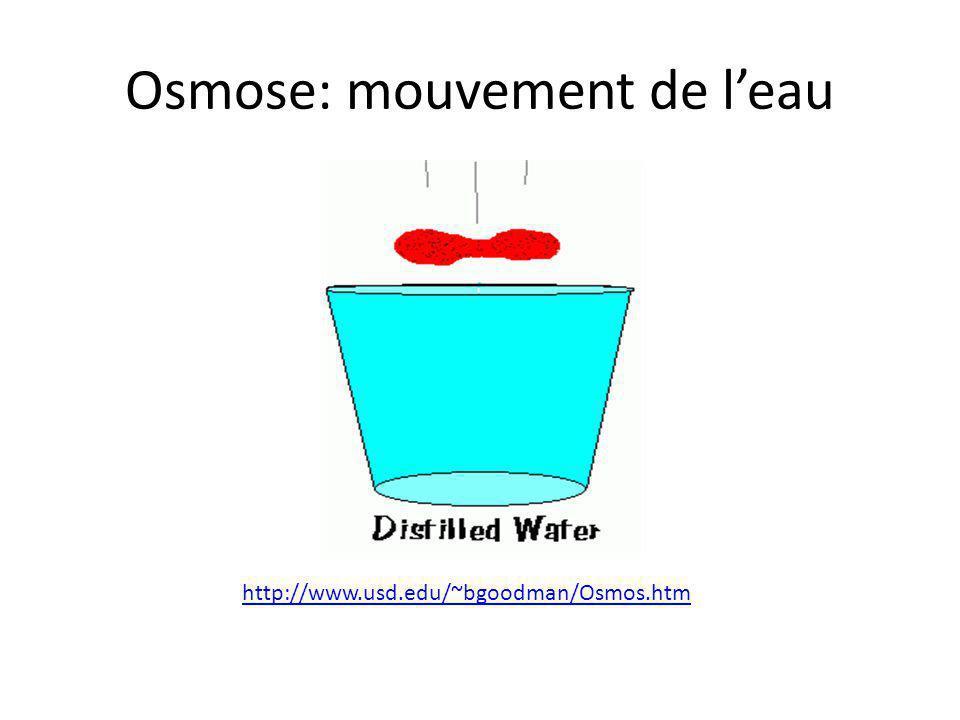 Osmose: mouvement de l'eau http://www.usd.edu/~bgoodman/Osmos.htm