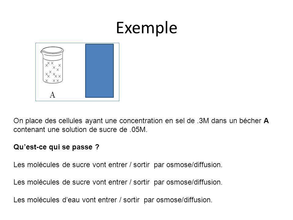 Exemple On place des cellules ayant une concentration en sel de.3M dans un bécher A contenant une solution de sucre de.05M. Qu'est-ce qui se passe ? L