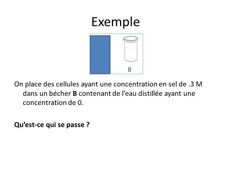 Exemple On place des cellules ayant une concentration en sel de.3 M dans un bécher B contenant de l'eau distillée ayant une concentration de 0. Qu'est