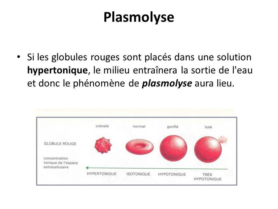 Plasmolyse Si les globules rouges sont placés dans une solution hypertonique, le milieu entraînera la sortie de l'eau et donc le phénomène de plasmoly