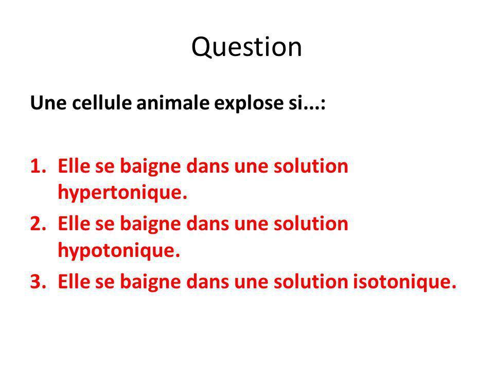 Question Une cellule animale explose si...: 1.Elle se baigne dans une solution hypertonique. 2.Elle se baigne dans une solution hypotonique. 3.Elle se