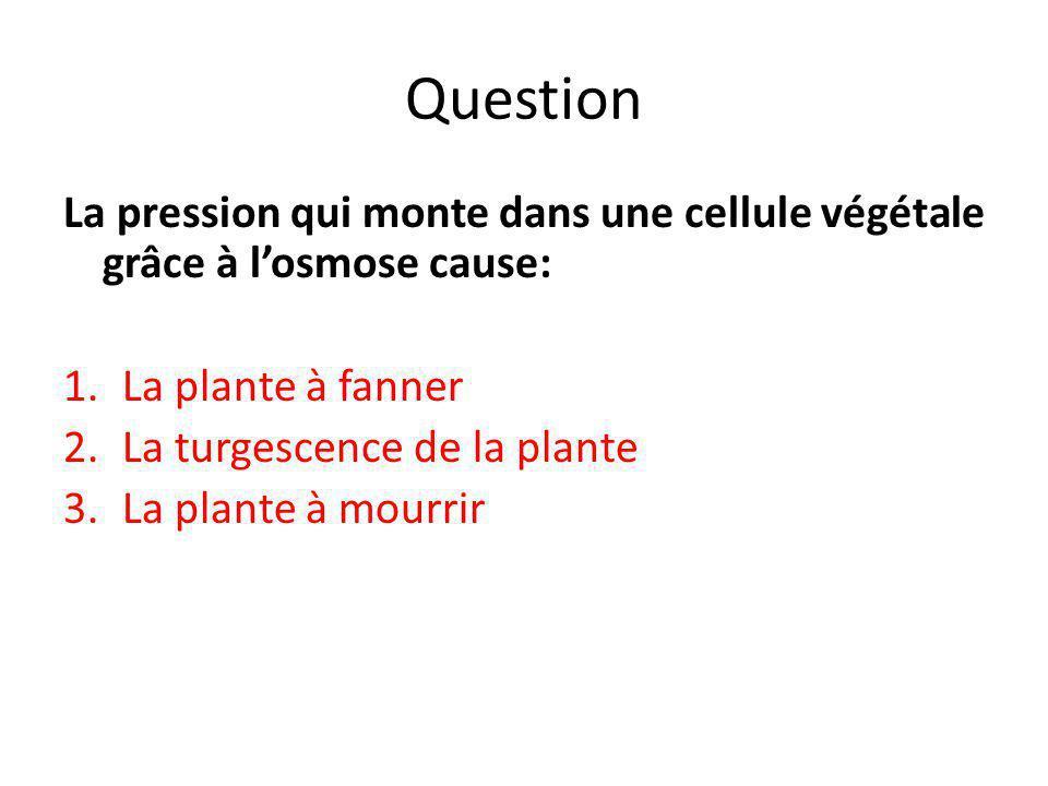 Question La pression qui monte dans une cellule végétale grâce à l'osmose cause: 1.La plante à fanner 2.La turgescence de la plante 3.La plante à mour