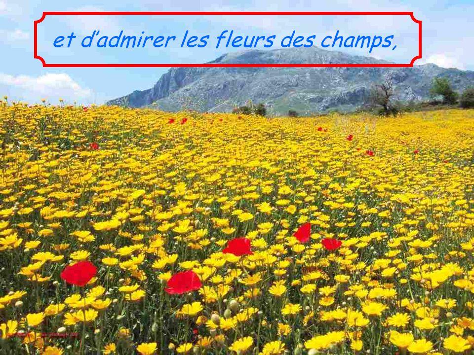 et d'admirer les fleurs des champs,