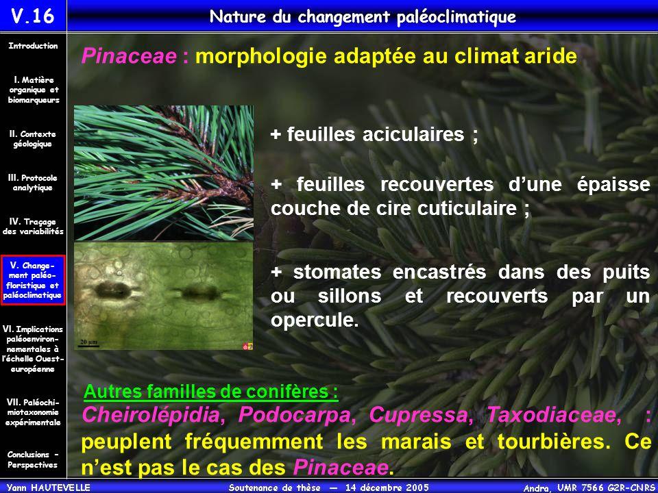 Pinaceae : morphologie adaptée au climat aride + feuilles aciculaires ; + feuilles recouvertes d'une épaisse couche de cire cuticulaire ; + stomates e