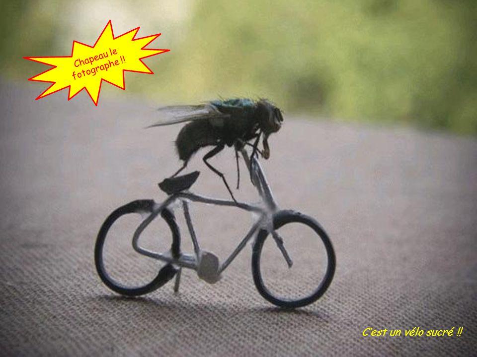 Chapeau le fotographe !! C'est un vélo sucré !!