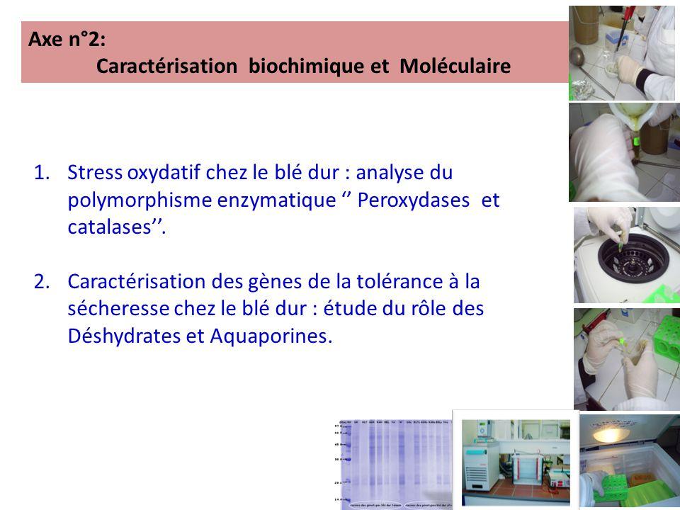 Axe n°2: Caractérisation biochimique et Moléculaire 1.Stress oxydatif chez le blé dur : analyse du polymorphisme enzymatique '' Peroxydases et catalases''.