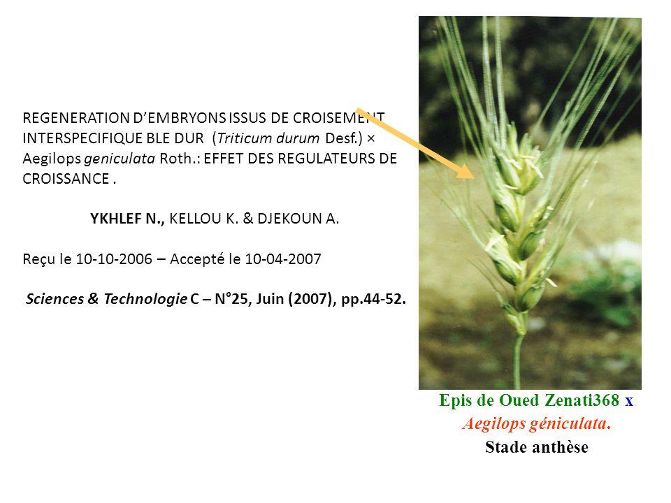 REGENERATION D'EMBRYONS ISSUS DE CROISEMENT INTERSPECIFIQUE BLE DUR (Triticum durum Desf.) × Aegilops geniculata Roth.: EFFET DES REGULATEURS DE CROISSANCE.