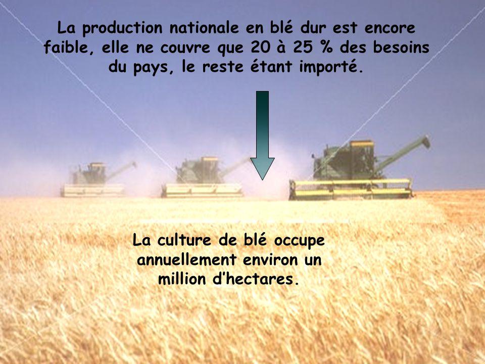 La production nationale en blé dur est encore faible, elle ne couvre que 20 à 25 % des besoins du pays, le reste étant importé.