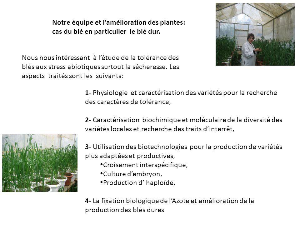 Notre équipe et l'amélioration des plantes: cas du blé en particulier le blé dur.
