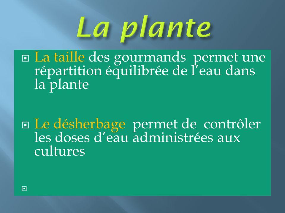  La taille des gourmands permet une répartition équilibrée de l'eau dans la plante  Le désherbage permet de contrôler les doses d'eau administrées a