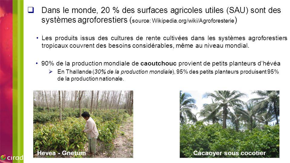 Cacaoyer sous cocotier Hevea - Gnetum 90% de la production mondiale de caoutchouc provient de petits planteurs d'hévéa  En Thaïlande (30% de la produ