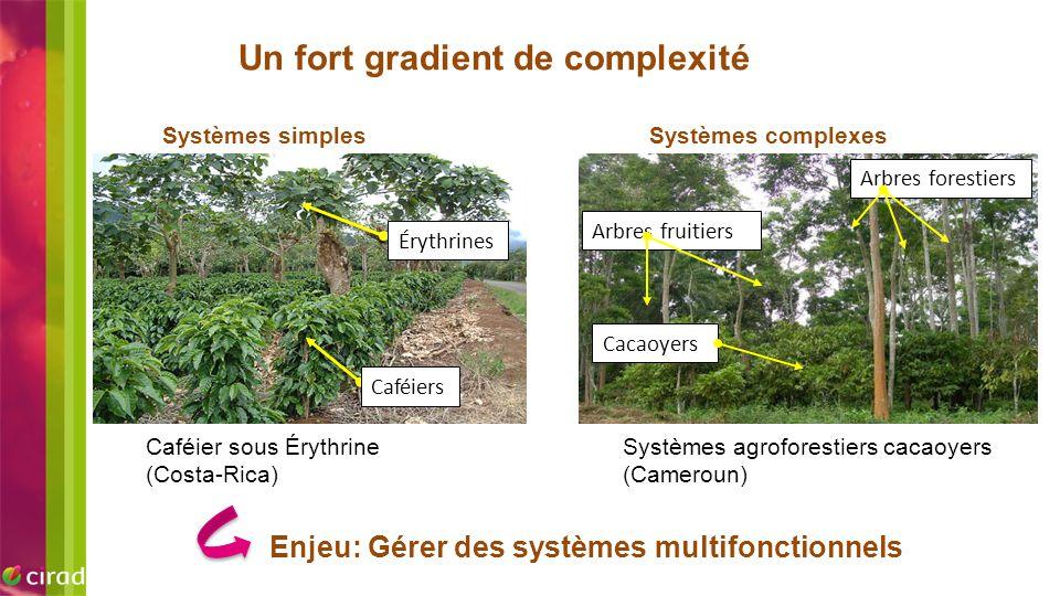 Un fort gradient de complexité Caféier sous Érythrine (Costa-Rica) Systèmes simples Caféiers Érythrines Systèmes agroforestiers cacaoyers (Cameroun) S