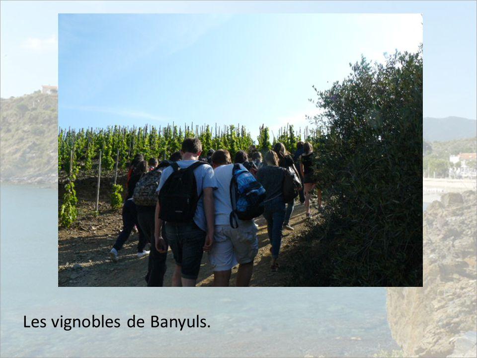 Les vignobles de Banyuls.