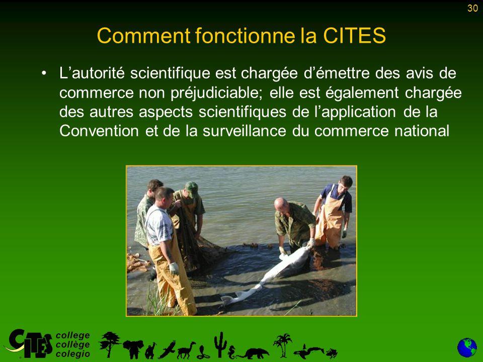 30 Comment fonctionne la CITES L'autorité scientifique est chargée d'émettre des avis de commerce non préjudiciable; elle est également chargée des au