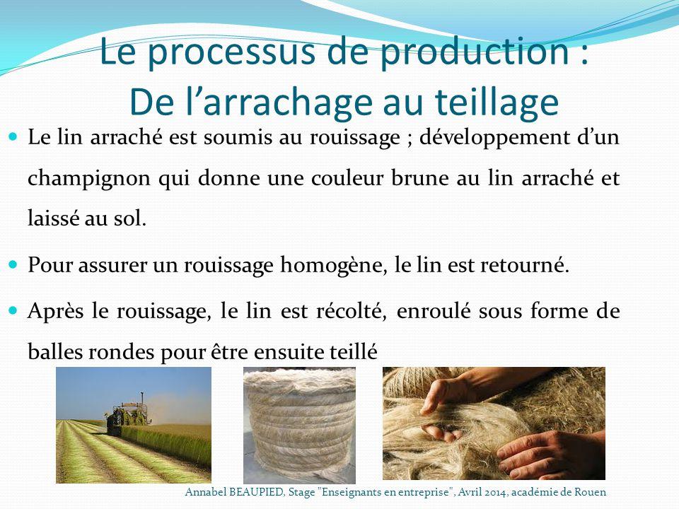 Le processus de production : De l'arrachage au teillage Le lin arraché est soumis au rouissage ; développement d'un champignon qui donne une couleur b